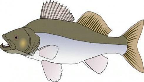 Larger clipart large fish Clipart Fish Cliparts Big Cliparts
