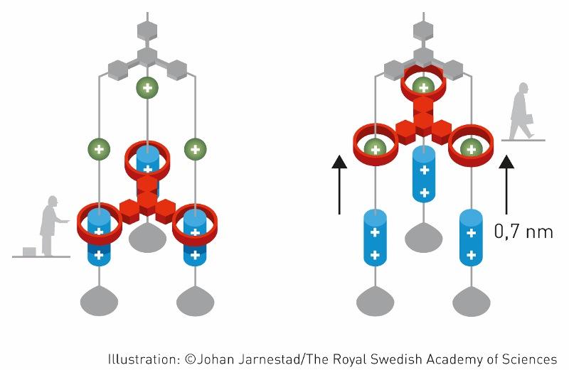 "Larger clipart nobel prize ""New chemical few molecular Prize"