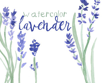 Lavender clipart #11