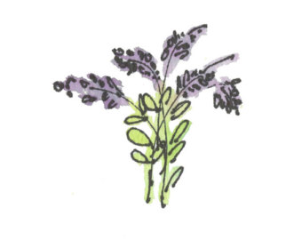 Lavender clipart / Resolution 8