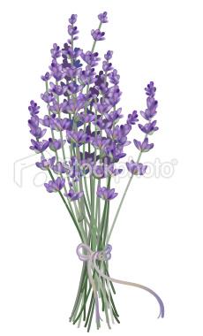 Lavender clipart #13