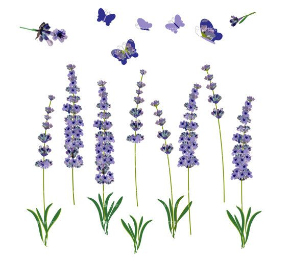 Stars clipart lavender Lavender Lavender Clipart Clipart Clipartion