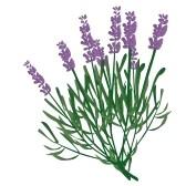 Lavender clipart #4