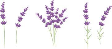 Lavender clipart #3