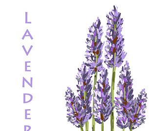 Lavender clipart 2 lavender printable files lavender