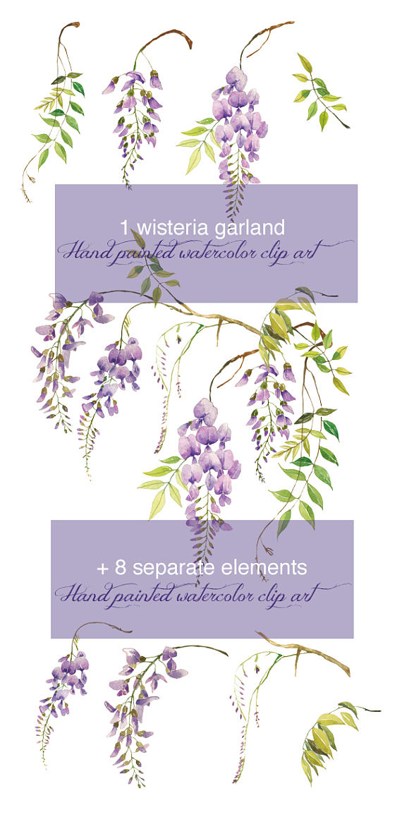 Wisteria clipart painting Floral a Printable digital watercolor