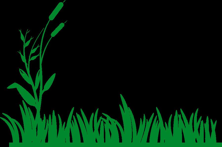 Reed clipart sun background Clip Savoronmorehead Lawn clipart Art
