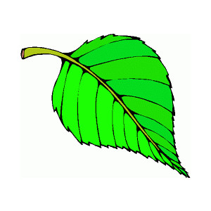 Leaf clipart Free Clip Clip Art Leaf