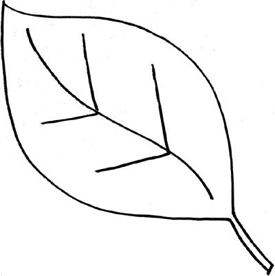 Of draw leaves Simple outline