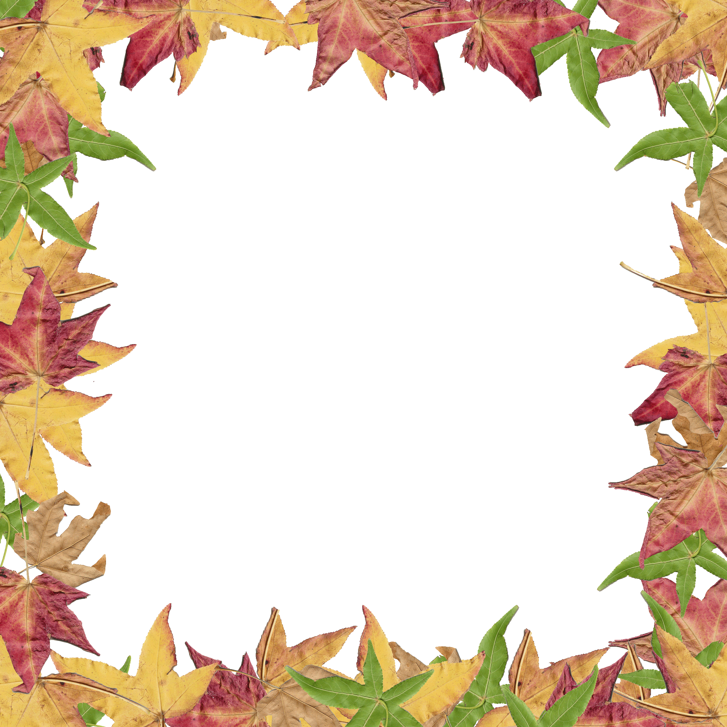 Leaves clipart boarder Images Free fall%20border%20clipart Clipart Leaves