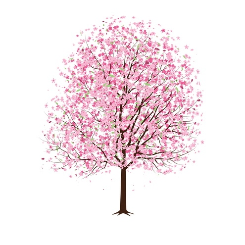 Pink Flower clipart japanese cherry blossom Traditions and Trees Tree Japanese