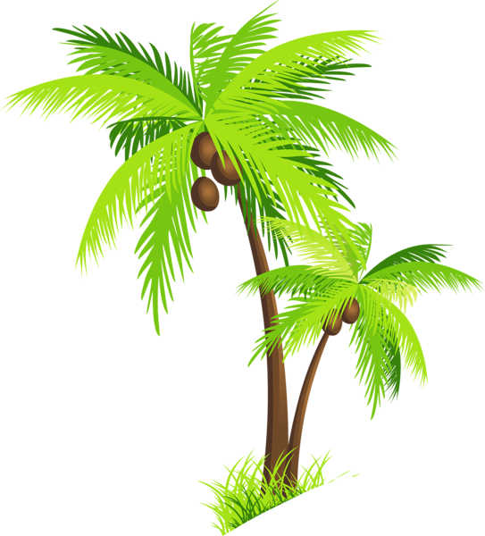 Palm Tree clipart palma Picture with  Clipart for