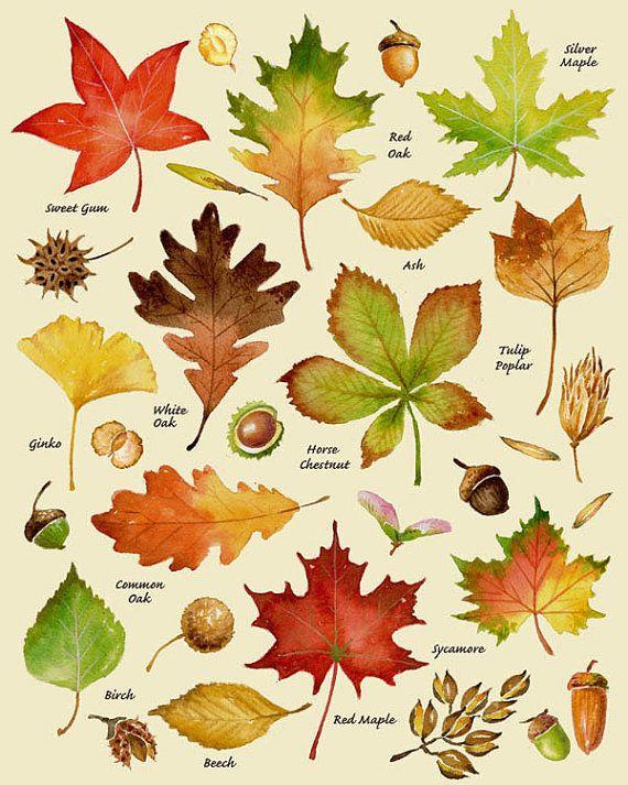 Plant clipart different kind plant Print Leaves on herfst Leaf
