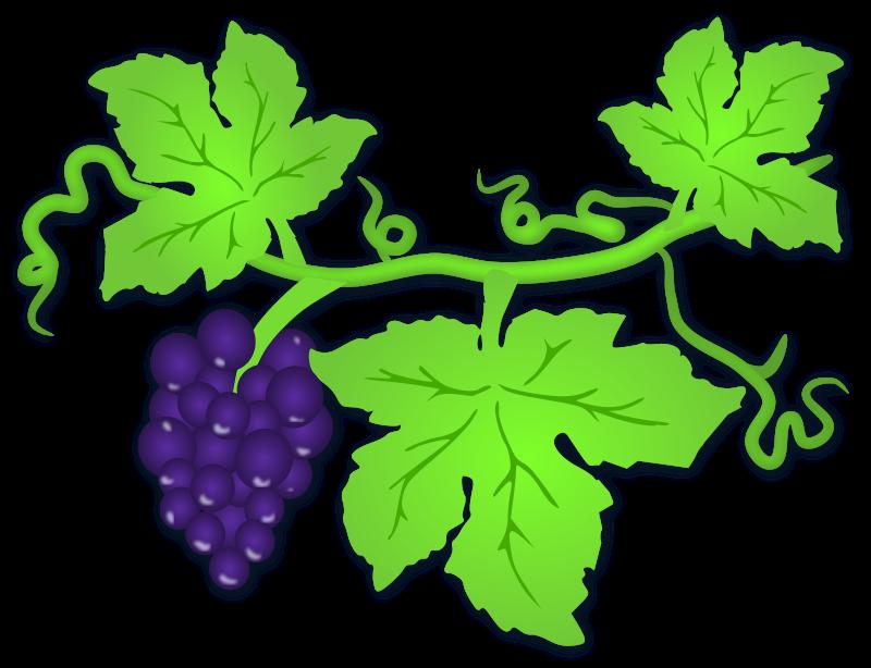 Ivy clipart grape leaves Grape  Clipart Leaf