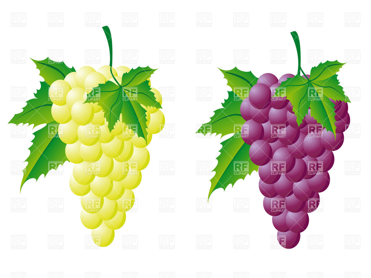 Grape clipart grape leaves Clip 11 art Grapes Clipartix