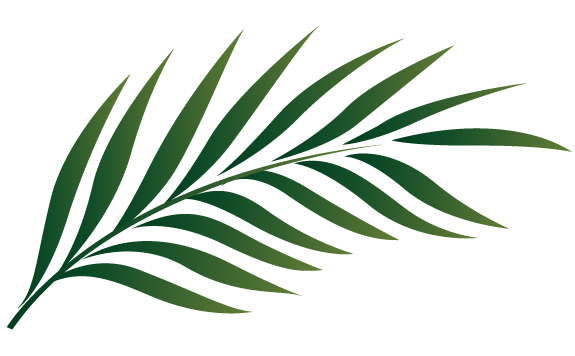 Leaves clipart tropical leaf #9