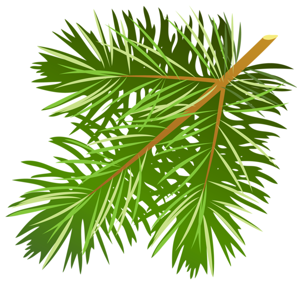 Pine Cone clipart pine leaves Pine Needle Needle Clipart Clipart