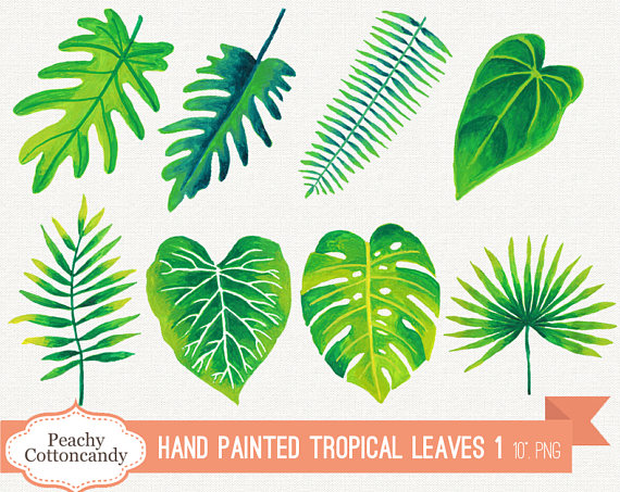 Leaves clipart tropical leaf #8