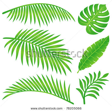 Leaves clipart tropical leaf #4