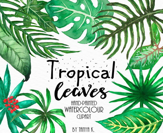 Leaves clipart tropical leaf #12