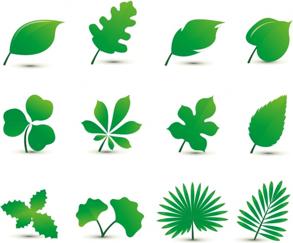 Commercial (3 Leaf  vector)
