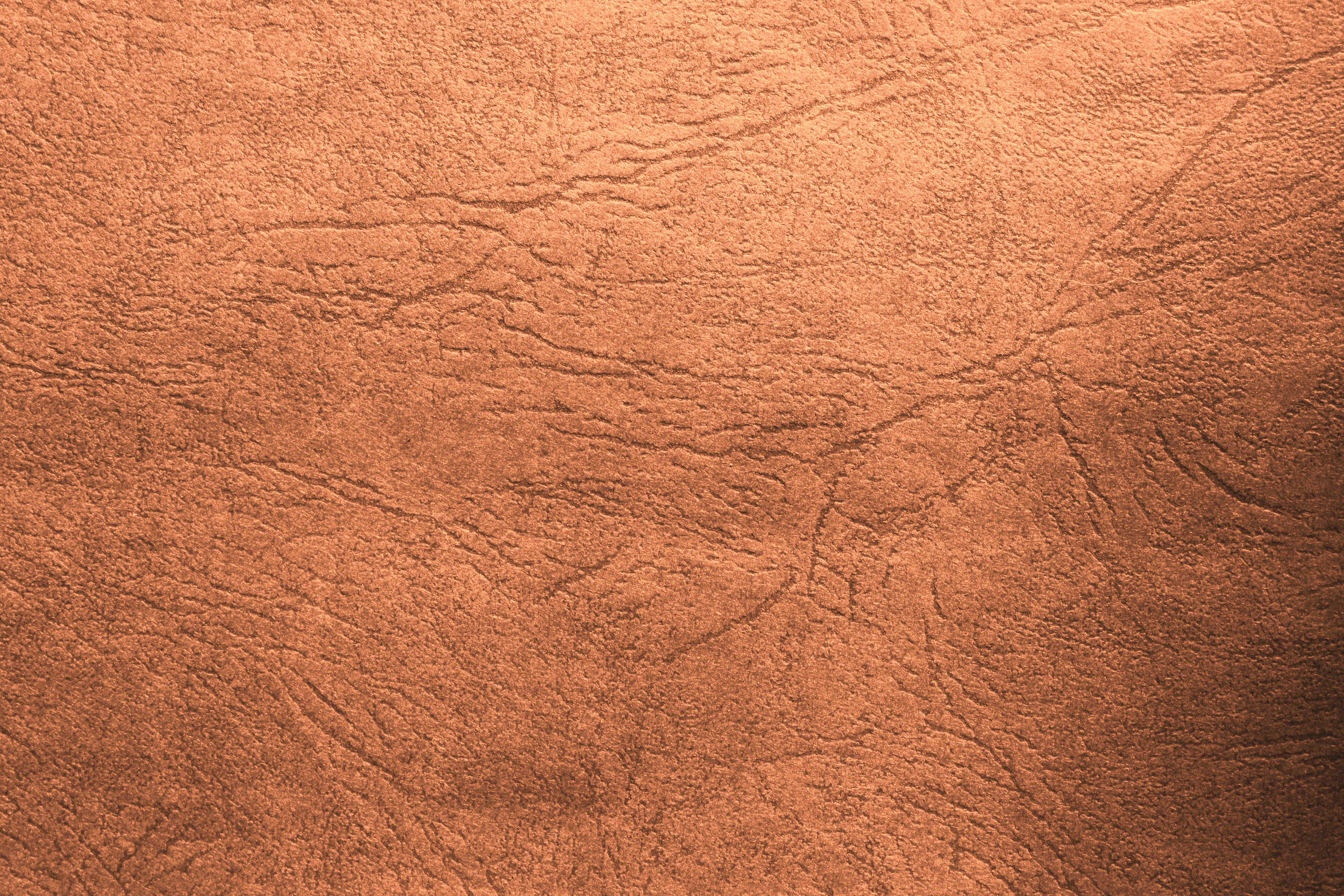 Leather Textures clipart reptile  Leather or leather Picture