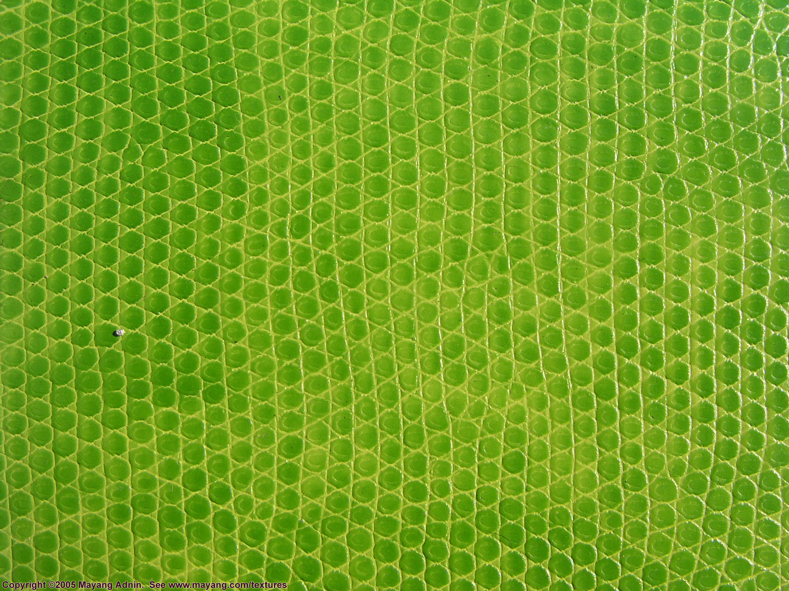 Leather Textures clipart lizard 20150525094344 (2560 texture skin 5562eed003d38