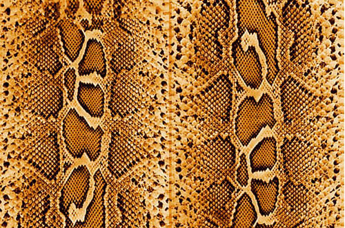 Leather Textures clipart snake texture Free For textures Collection Designbeep