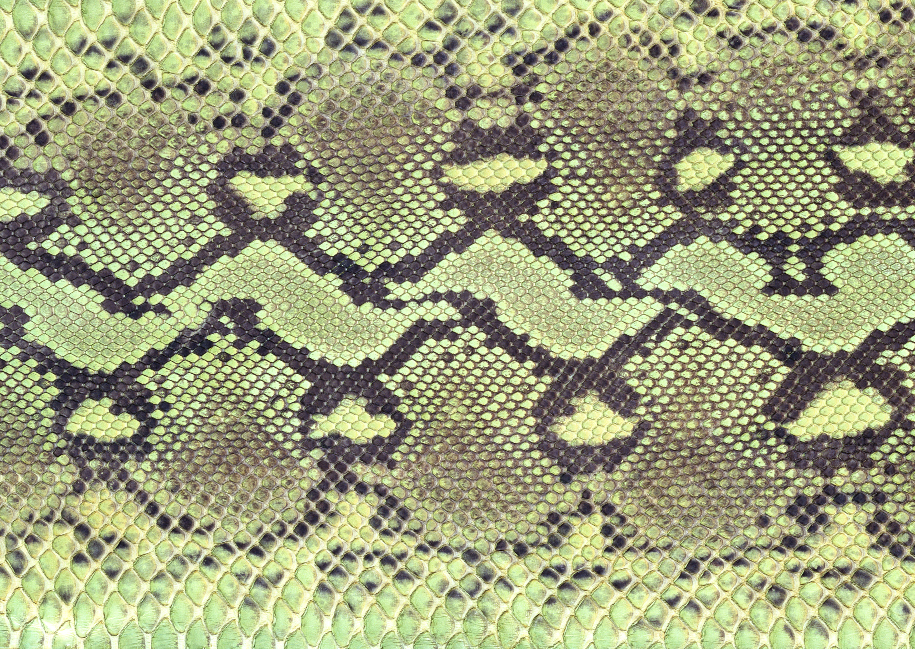 Leather Textures clipart snakeskin Texture Size three Background Download
