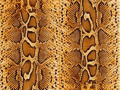 Leather Textures clipart snakeskin Pack by Tileable Texture snake
