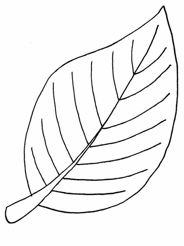 Drawn pot plant leaf template ClipArt For on Coloring Kids