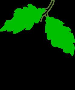 Grape clipart grape leaf Clip Leaves Grape Leaves Art