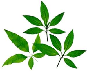 Here Herbal Examples Herbal Picture: