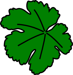 Drawn jungle leave vine Art leaf Vine online com