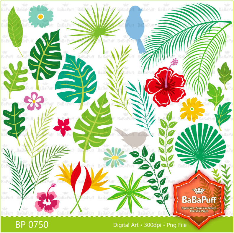 Leaves clipart tropical leaf #14