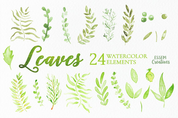 Wreath clipart sage Foliage  Leaves Watercolor Elements
