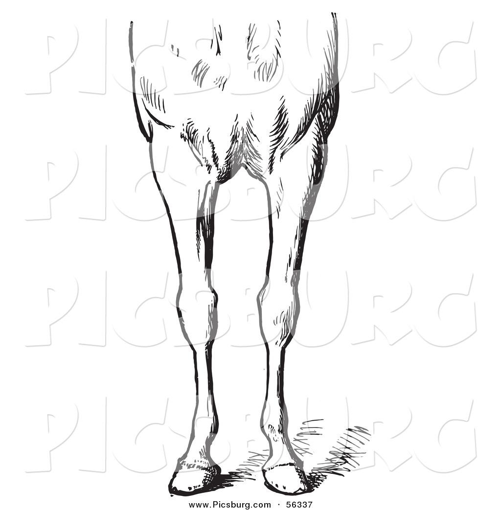 Legs clipart bad Horse  Legs