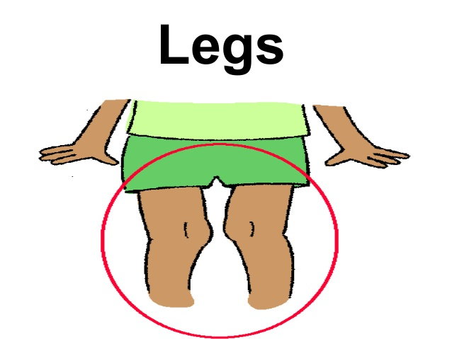 Legs clipart body part Vocabulary Body parts