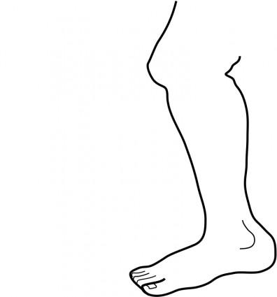 Legs clipart limb Art Clipart leg%20clipart Leg Clipart