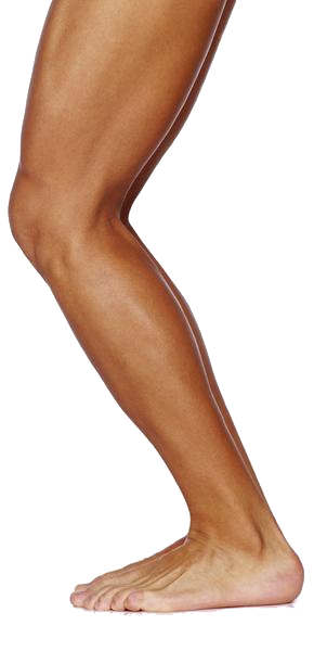 Legs clipart one PNG images leg image PNG