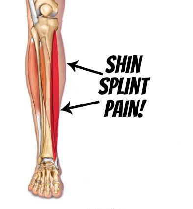 Legs clipart women's Shin Sports Burbank Feet Shin