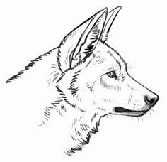 Wolf clipart leg Google Vectors drawing dog legs