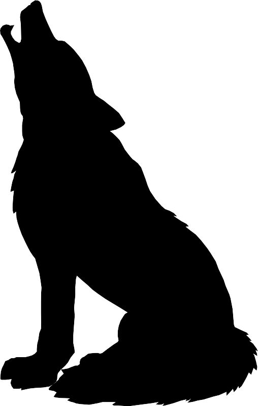 Sea Lion clipart animal shadow #3