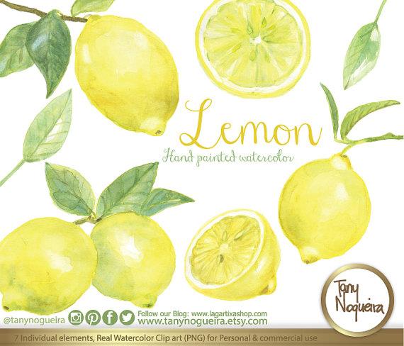 Lemon clipart painted Studio from Lemons hand art