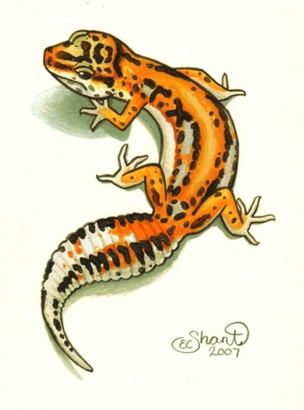Leopard Gecko clipart Lizard Leopard Download Lizard Lizard