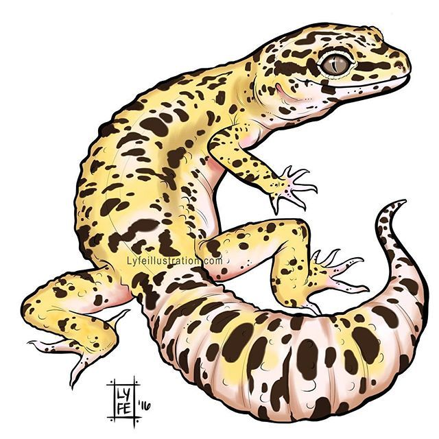 Leopard Gecko clipart Pinterest I'm are! many one