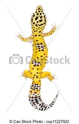 Leopard Lizard clipart silhouette Leopard on Photo Leopard background