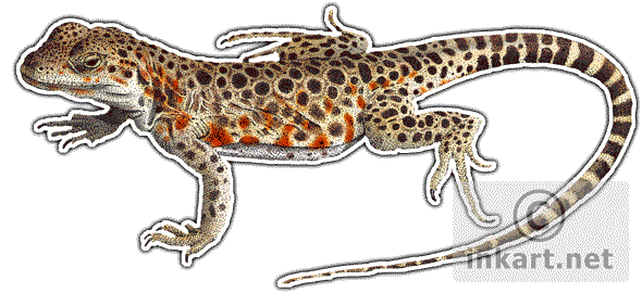Leopard Lizard clipart abstract Long Nosed Full Art Leopard