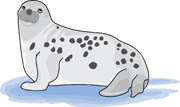 Leopard Seal clipart Seal Pictures Results  Search