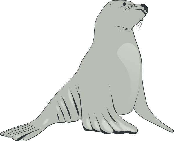 Drawn seal water animal Lion Clip Download online clip